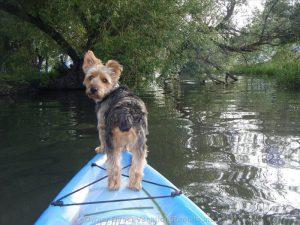 Pet friendly Vernon home on the lake #103704