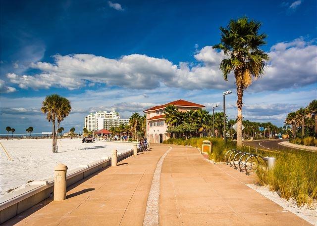Tampa, Florida / 241248