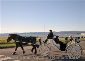 Horse-drawn carrige ride in Victoria, BC #206745