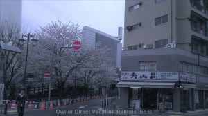 Cherry blossoms behind - Unit ID 205591