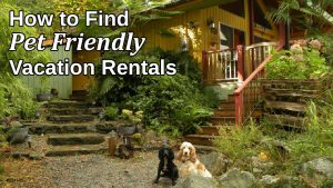 How to find pet friendly vacation rentals