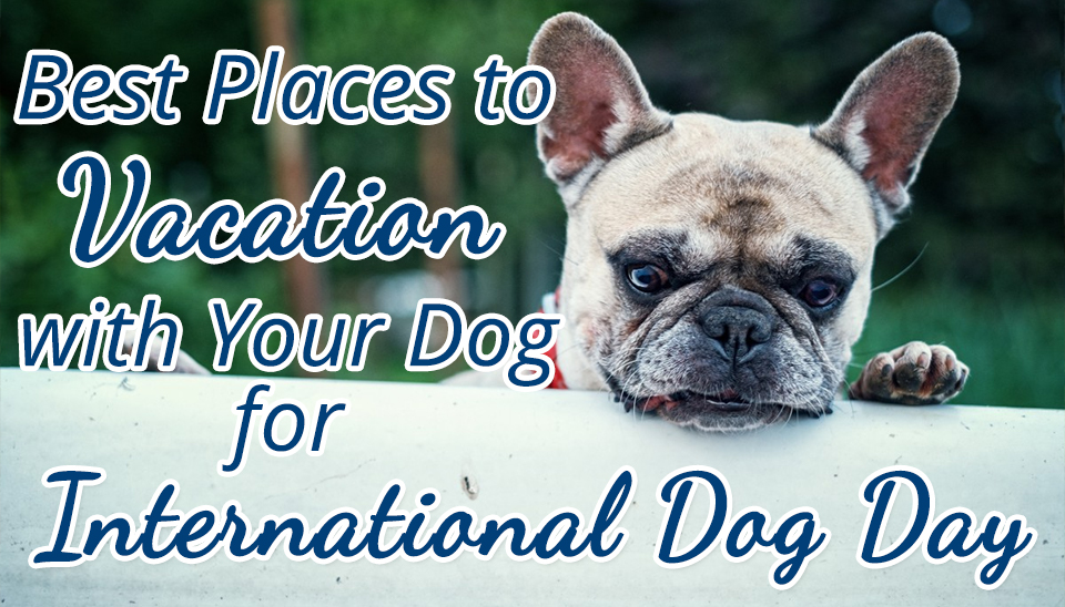 Best Places to Vacation with Your Dog for International Dog Day