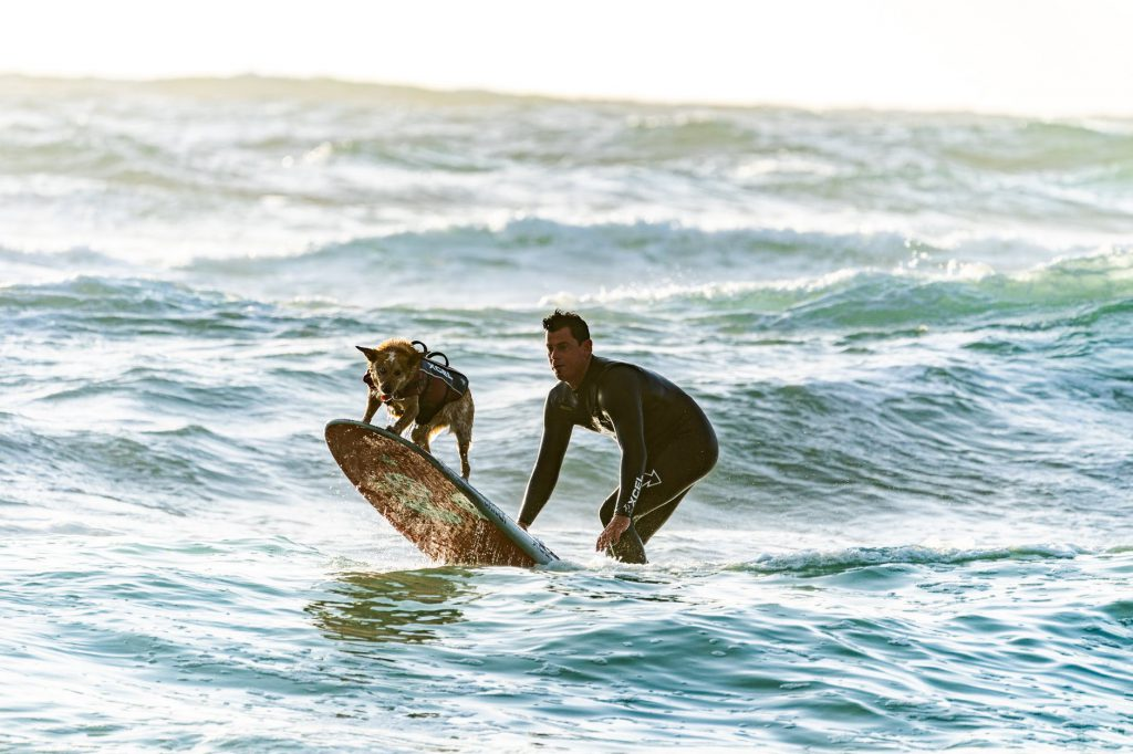 Surfing with your Dog